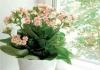 Kako zaštititi kućne biljke od umiranja
