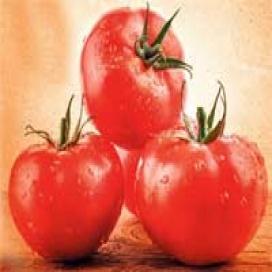 Zašto treba iskoristiti sezonu paradajza?